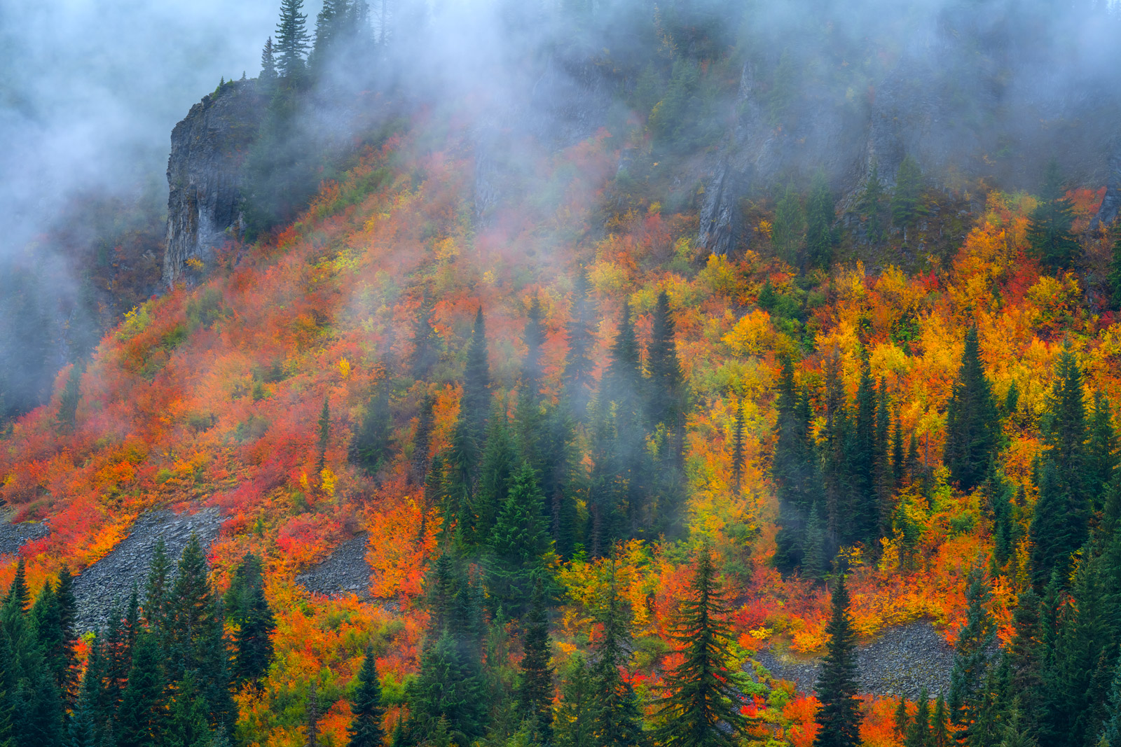 A Limited Edition, Fine Art photograph of fall color mixed with fog in Stevens Canyon near Mount Rainier in Washington. Available...