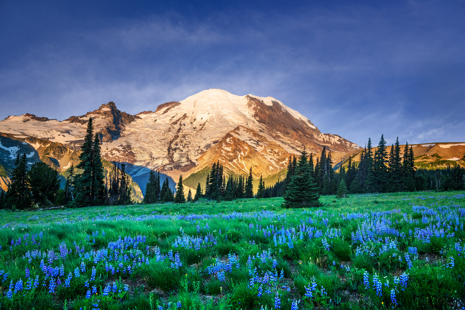 A Limited Edition, Fine Art photograph of purple lupine flowers blooming in the field in front of Mount Rainier in Washington...