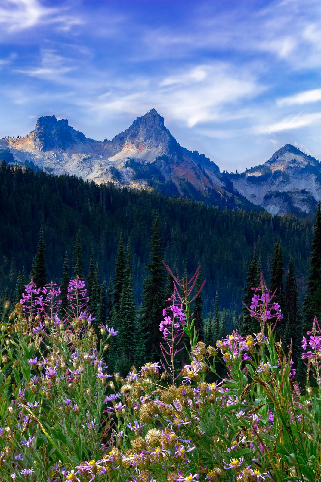 Washington, Mount Rainier, Flowers, Tatoosh Range, photo