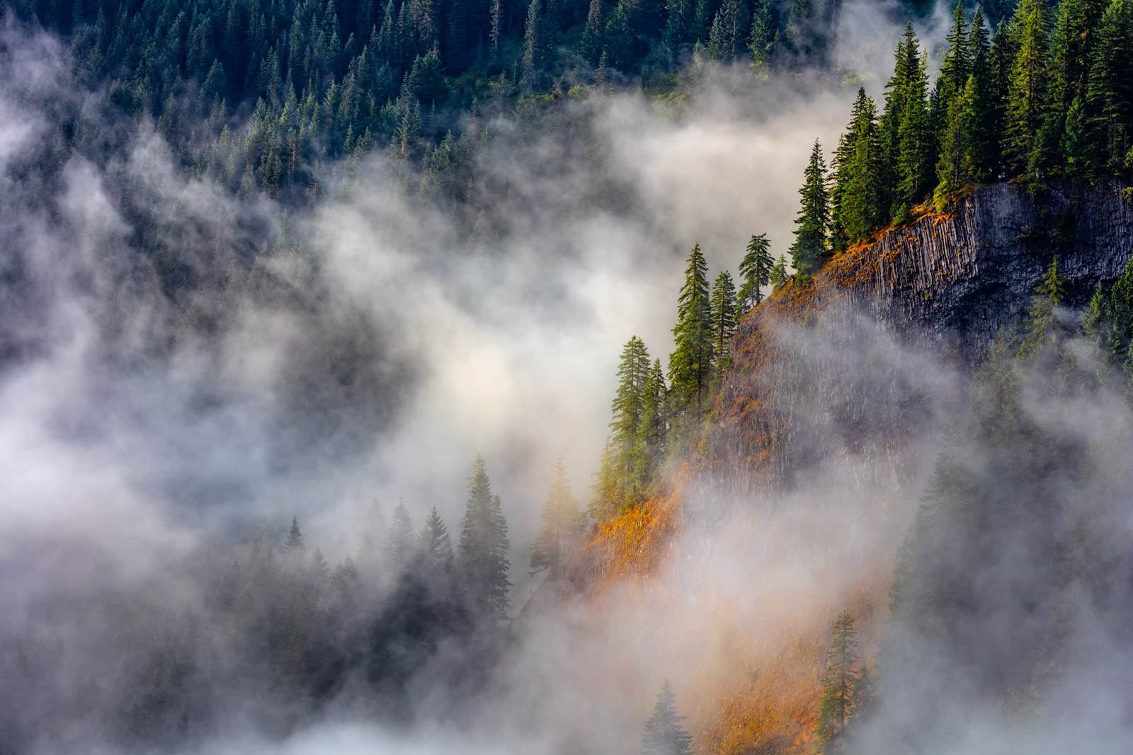 trees emerging though the fog