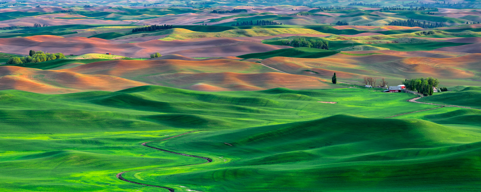 Washington, Palouse, field, green, farm, Spring, photo