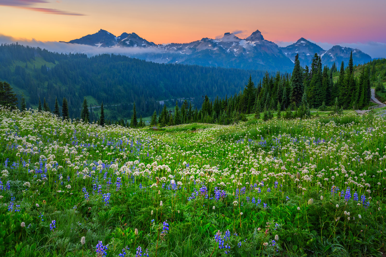 Washington, Rainier, Mount Rainier, flowers, Tatoosh, Range, Mountains, National Park