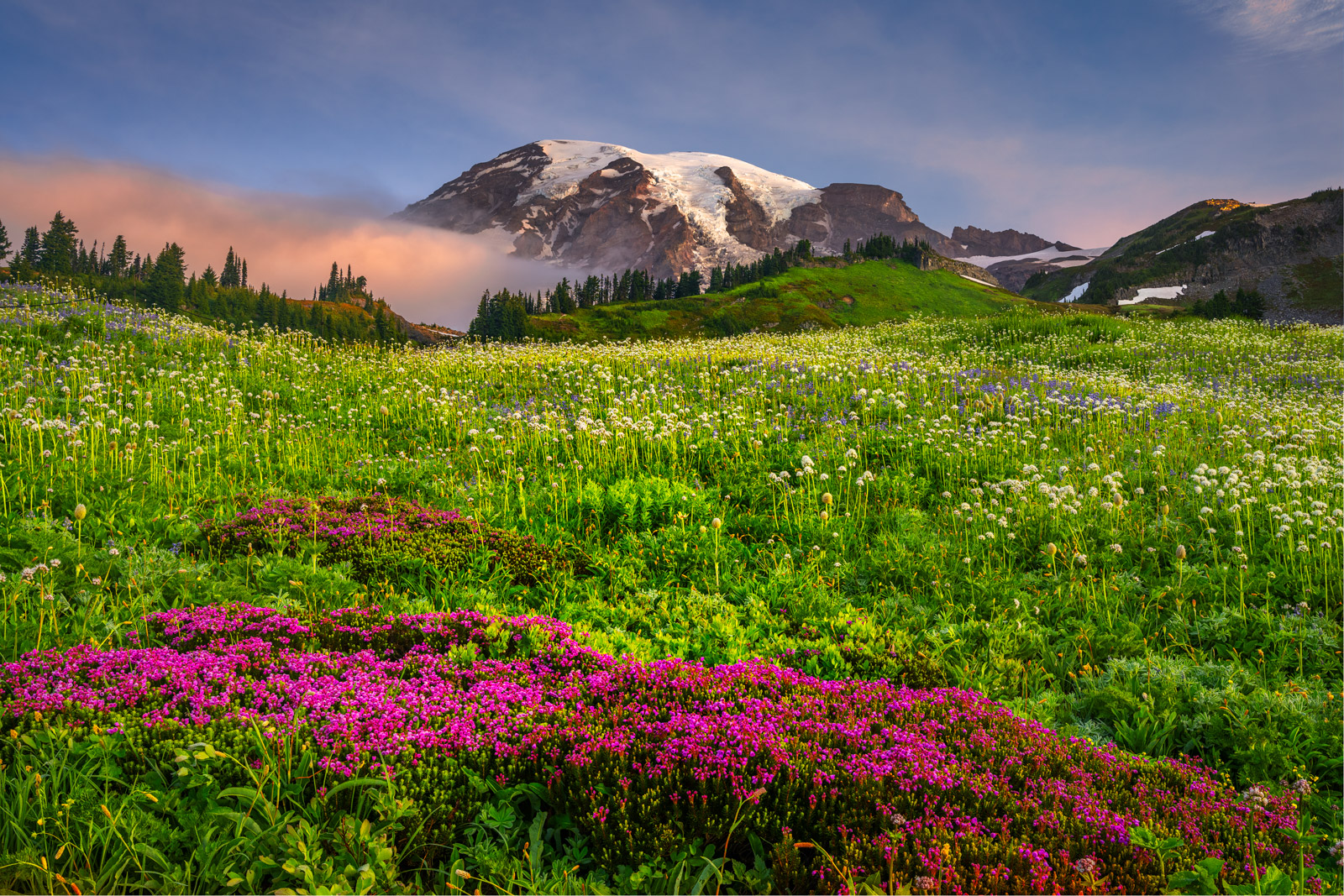 Washington, Mount Rainier, National Park, Mountain, Flowers, Christmas, Fine Art, Landscape, Photograph