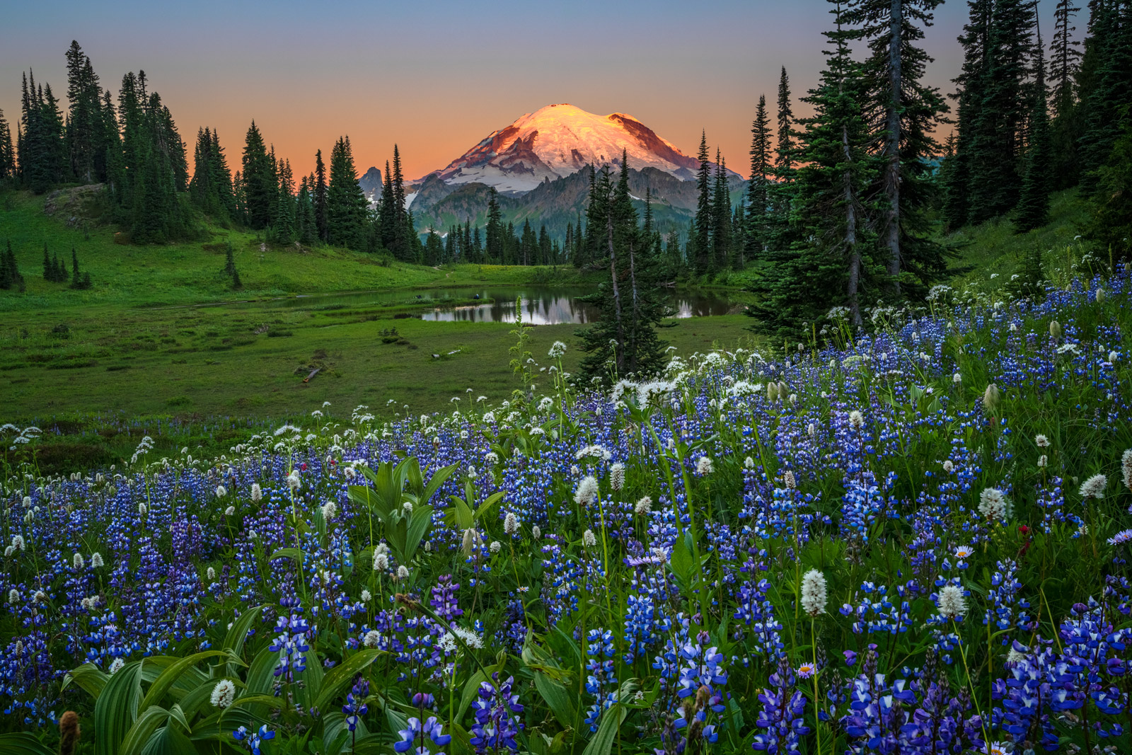 Washington, Mount Rainier, National Park, Flowers, Summer, Tipsoo, Lake, Lupines, Fine Art, Landscape, Photograph