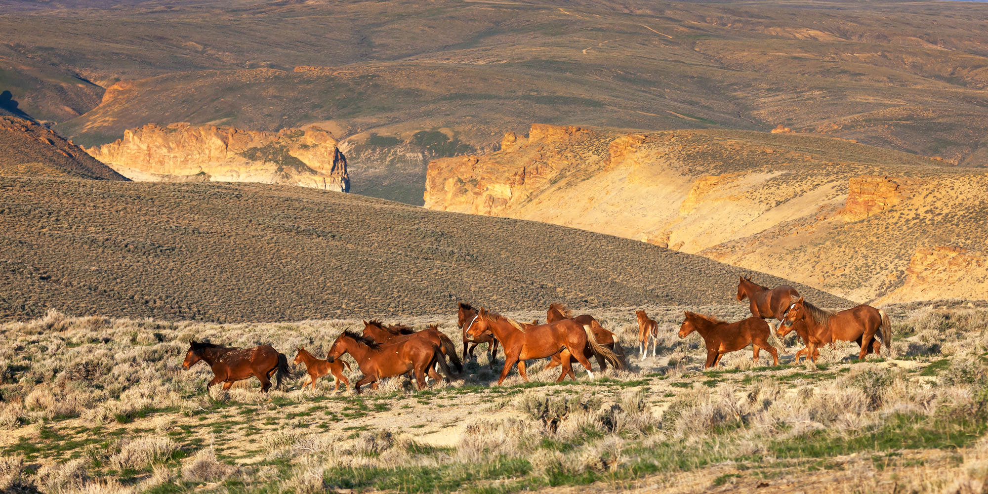 Horse, Wild Horse, Wyoming, limited edition, photograph fine art, wildlife, photo
