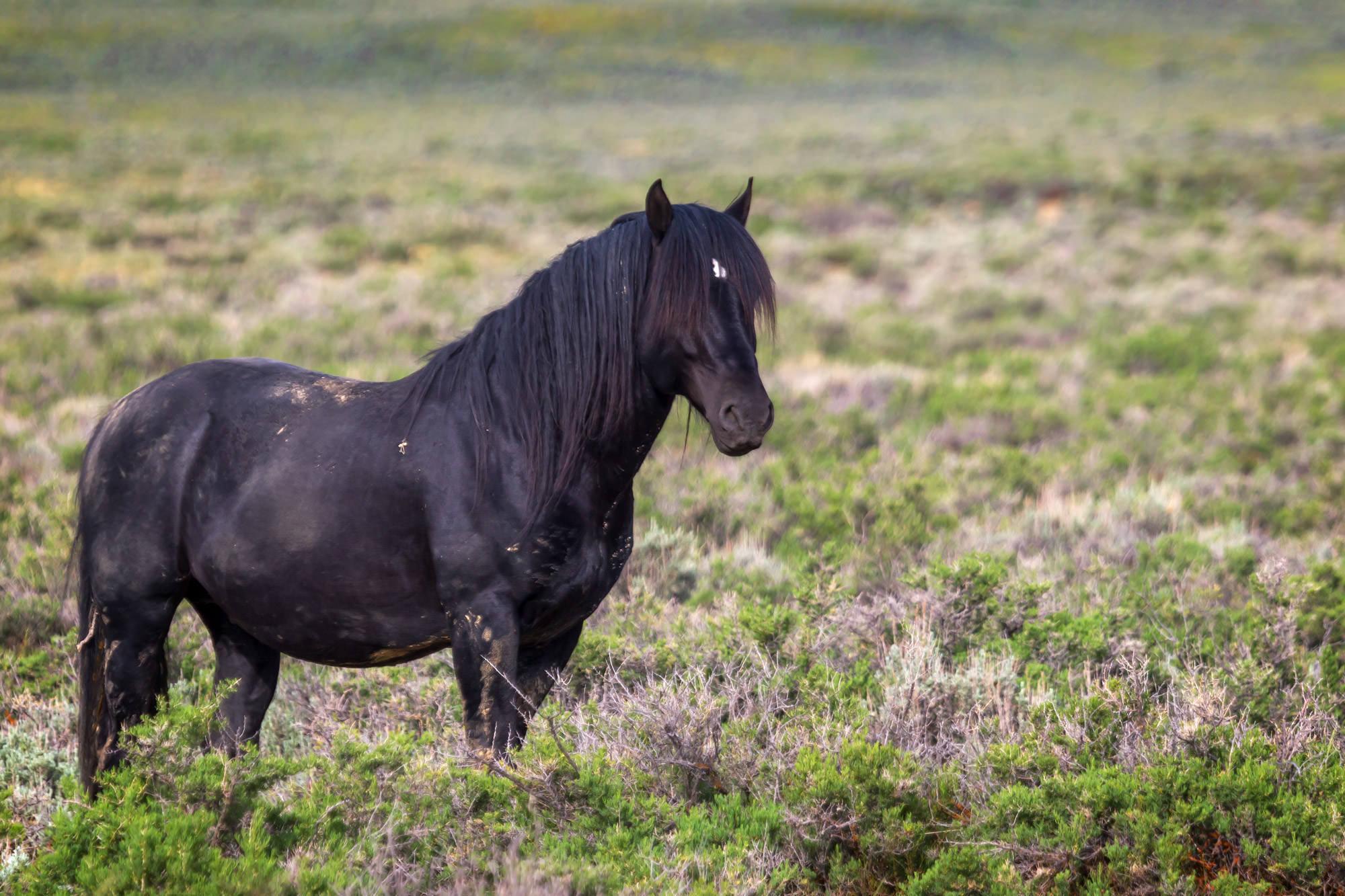 Horse, Wild Horse, Wyoming, limited edition, photograph fine art, wildlife, photo