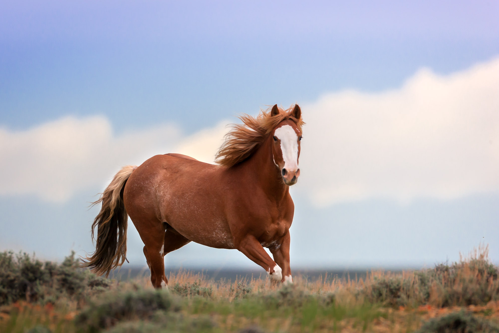 Wild Horse Fine Art Photography A Limited Edition photograph of a Wild Horse running around in an open field in Southern Wyoming...