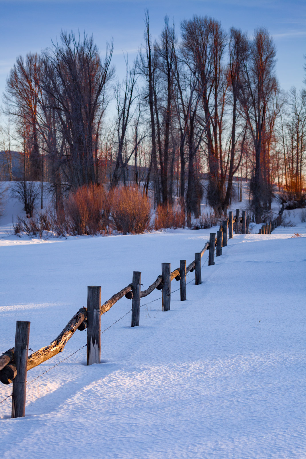 Wyoming, Grand Teton, Winter, Snow, fence, trees, Winter Scene , photo