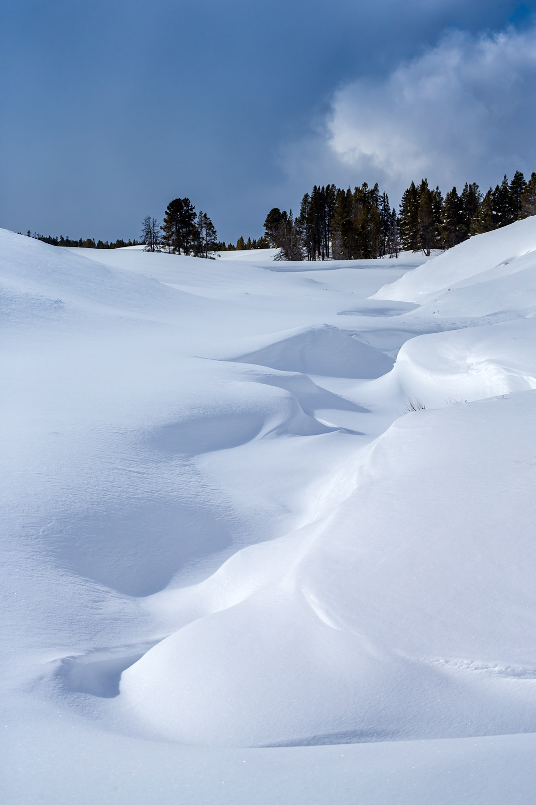 Wyoming, Yellowstone, Winter, Hayden Valley, snow, shadows, limited edition, photograph, fine art, landscape, photo