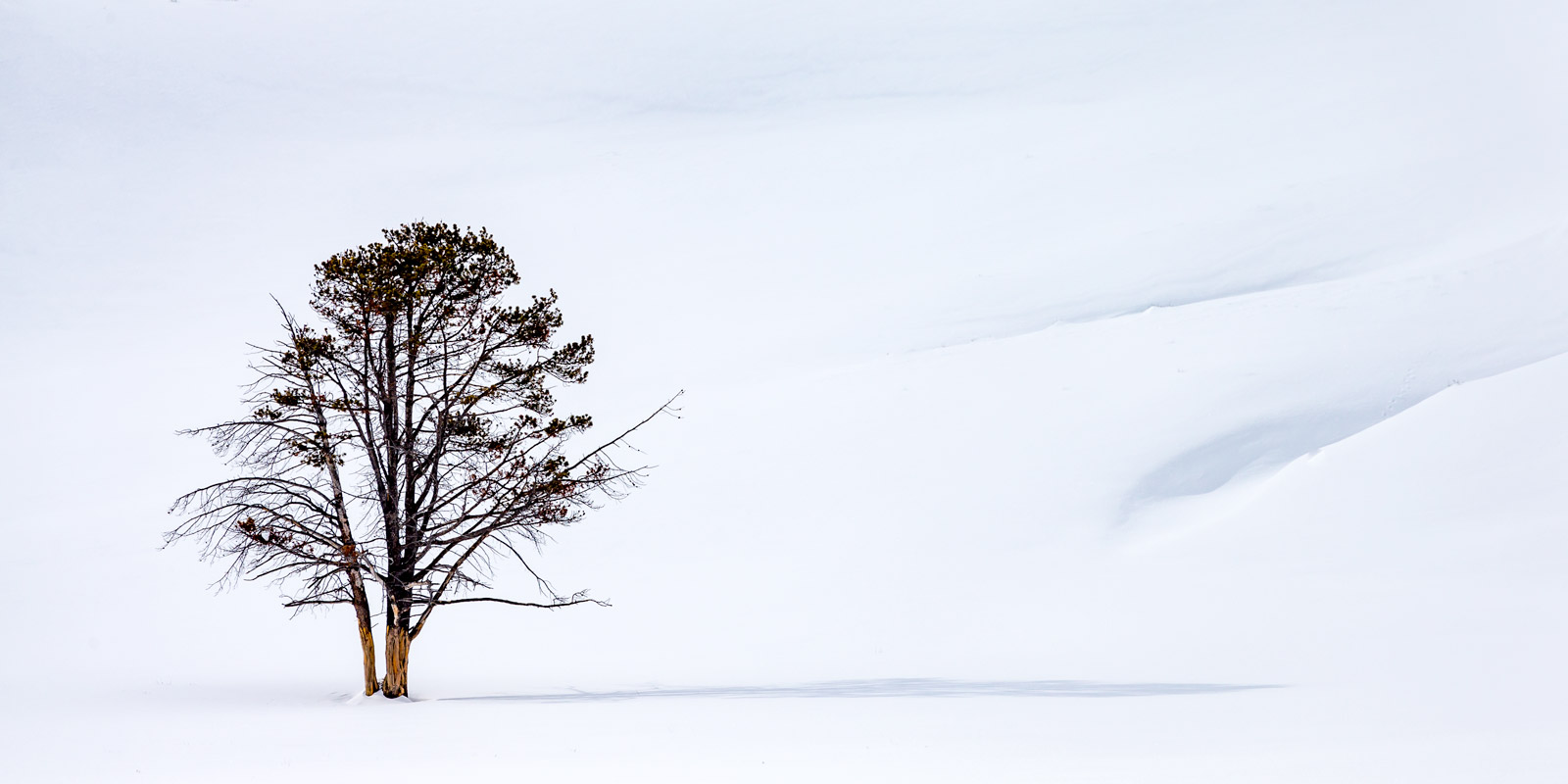 Wyoming, Yellowstone, Winter, Hayden Valley, Lone Tree, Tree, limited edition, photograph, fine art, landscape, photo