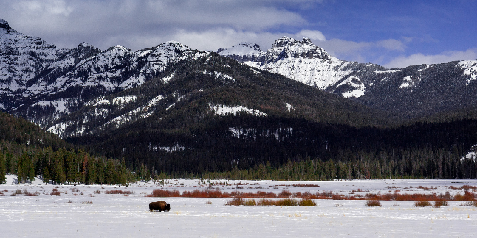 A Limited Edition, Fine Art photograph of a lone bison crossing a deep snow covered field in front of mountains at Yellowstone...